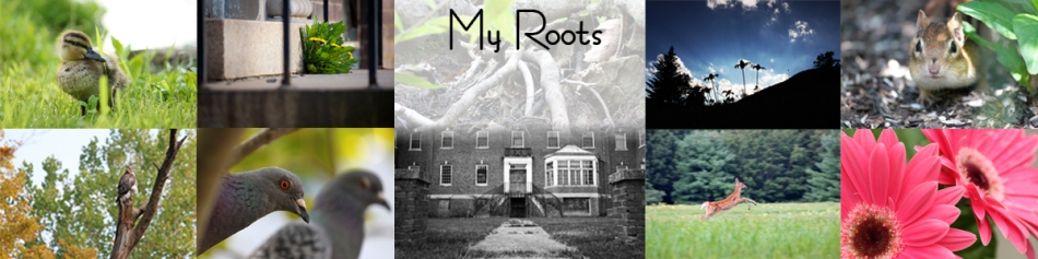 roots-category